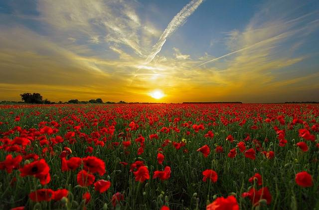 Sunset Field Poppy Sun - Free photo on Pixabay (510664)