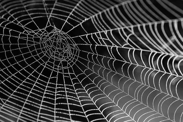 Cobweb Dewdrop Web - Free photo on Pixabay (513486)