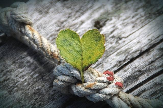 Heart Leaf Rope - Free photo on Pixabay (516275)