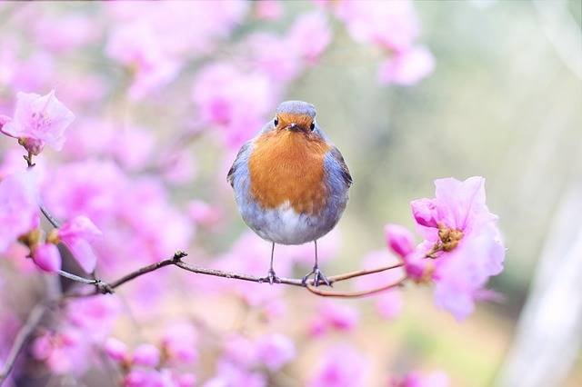 Spring Bird - Free photo on Pixabay (516585)