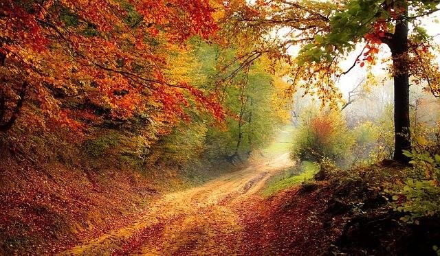 Road Forest Season - Free photo on Pixabay (516588)