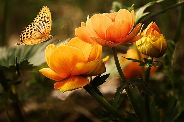 Flowers Butterflies Beautiful - Free photo on Pixabay (520127)