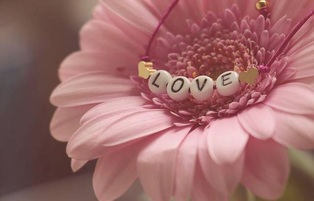 Love Bracelet Gerbera - Free photo on Pixabay (520317)