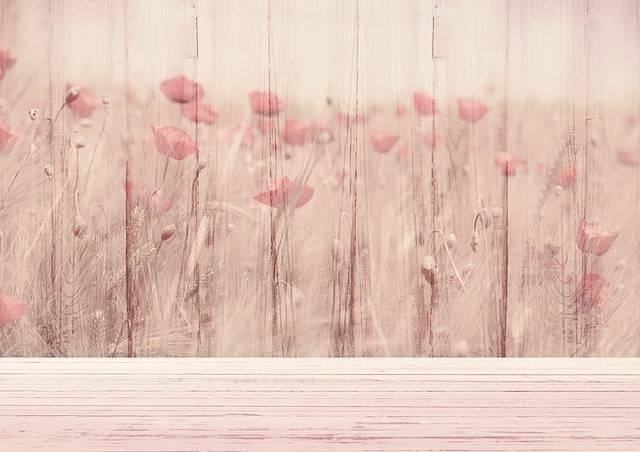 Background Image Flowers - Free photo on Pixabay (520535)