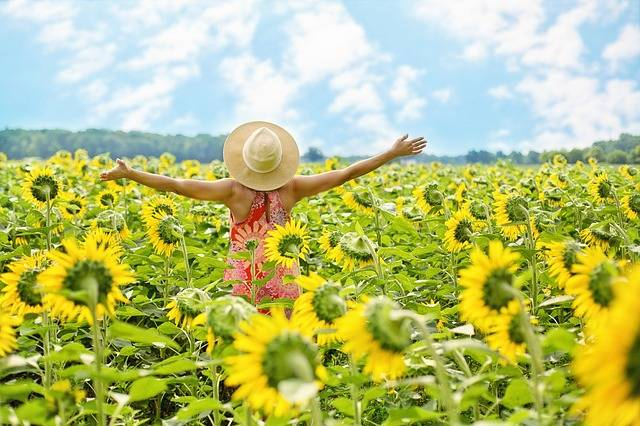 Sunflowers Field Woman - Free photo on Pixabay (521807)