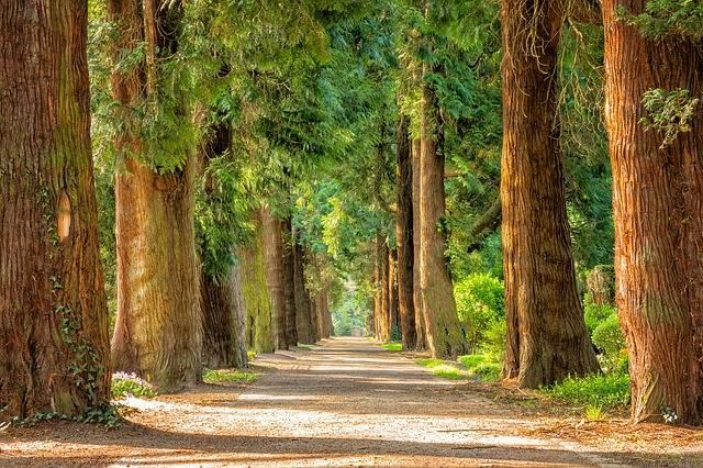 Avenue Trees Away - Free photo on Pixabay (527655)