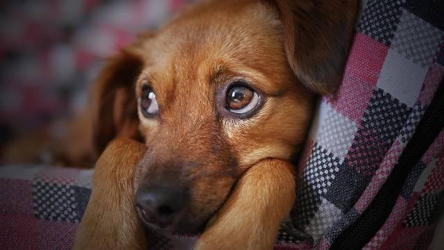 Dog Cute Animal - Free photo on Pixabay (528183)