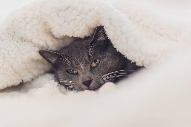 Cat Eyes Close Up - Free photo on Pixabay (531159)