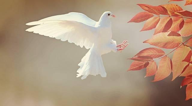 Dove Bird Animal - Free photo on Pixabay (536681)