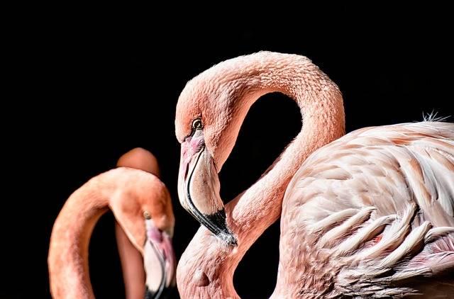 Flamingo Bird Colorful - Free photo on Pixabay (536688)