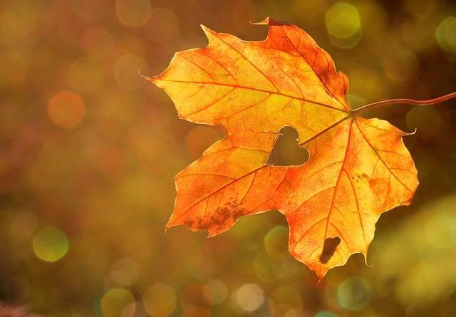 Heart Sweetheart Leaf - Free photo on Pixabay (538374)