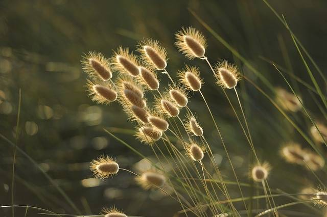 Grasses Nature Seeds - Free photo on Pixabay (538976)