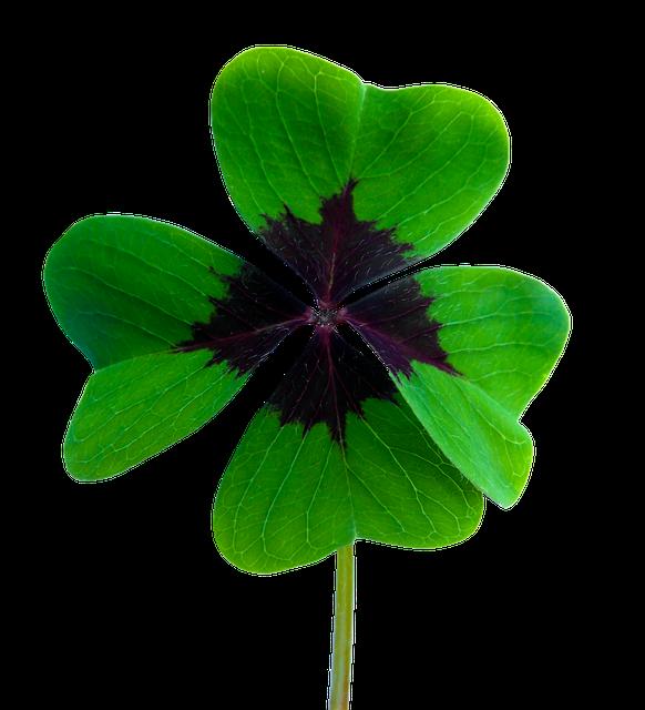 Luck Four Leaf Clover Vierblättrig - Free image on Pixabay (539023)