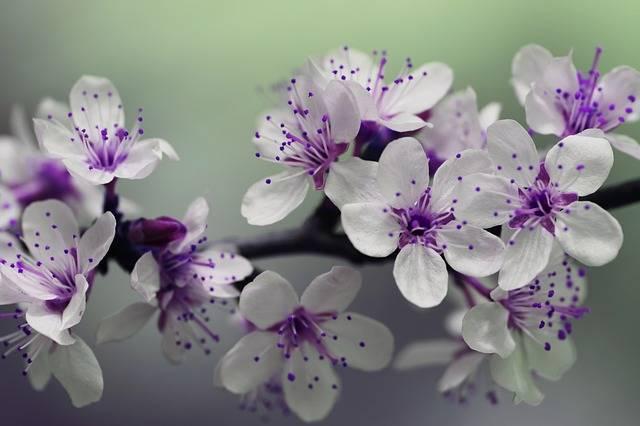 Blossom Petals Spring - Free photo on Pixabay (539142)