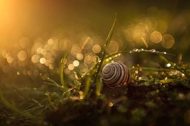 Flower Wildflower Sunset - Free photo on Pixabay (539146)