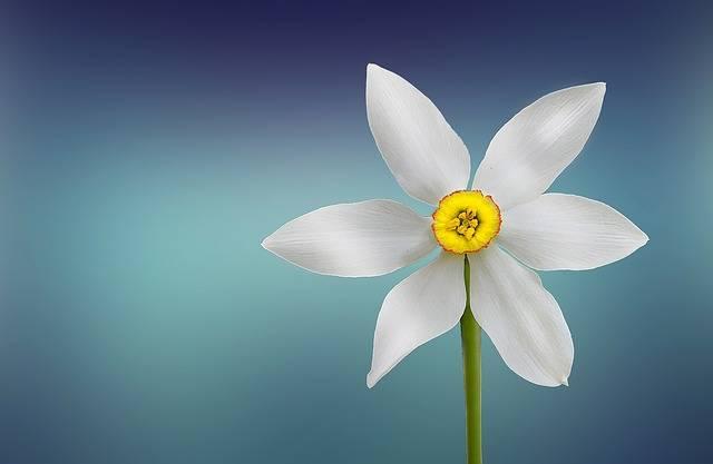 Flower White Beautiful - Free photo on Pixabay (539151)