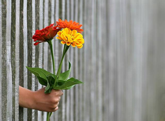 Hand Gift Bouquet - Free photo on Pixabay (540343)