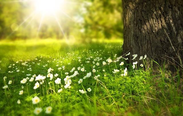 Spring Tree Flowers - Free photo on Pixabay (541540)