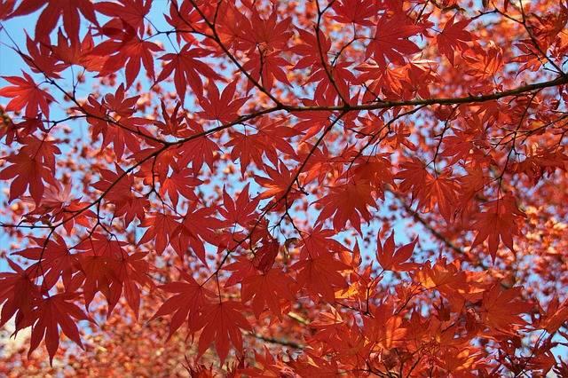 Tree Foliage Autumn - Free photo on Pixabay (545086)