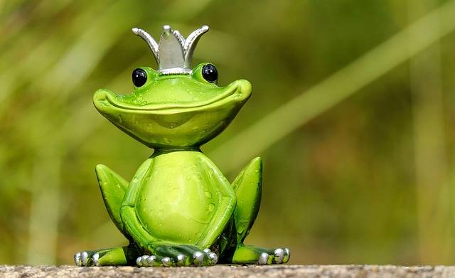 Frog Prince - Free photo on Pixabay (546111)