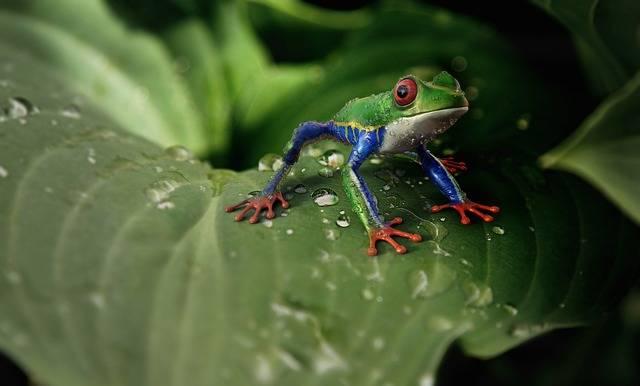 Frog Amphibians Animal - Free photo on Pixabay (546484)