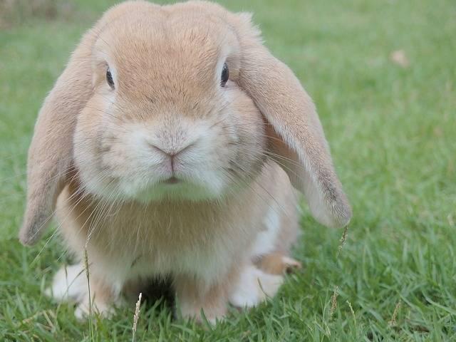 Bunny Rabbit Easter - Free photo on Pixabay (546507)