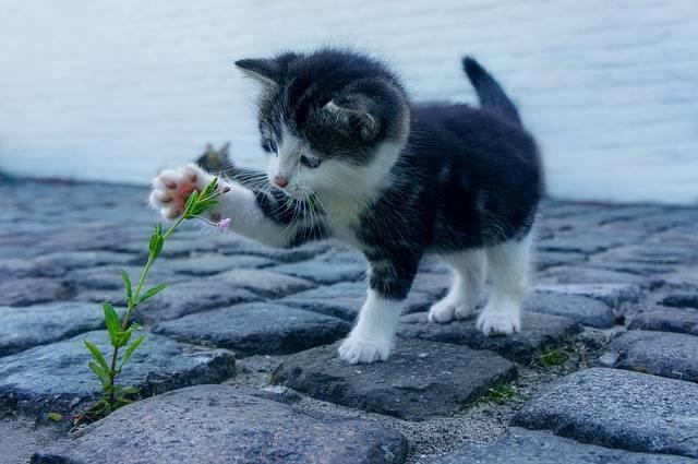 Cat Flower Kitten - Free photo on Pixabay (549761)