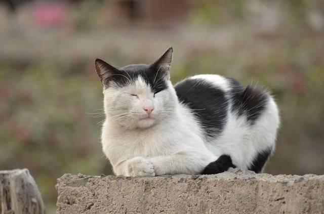 Cat White Black - Free photo on Pixabay (552835)