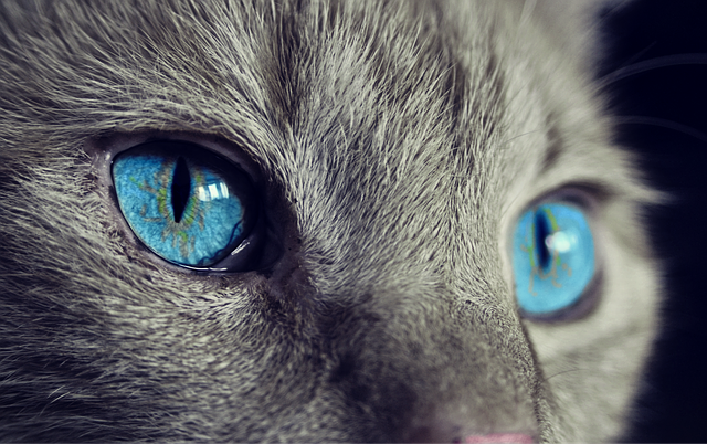 Cat Animal Cat'S Eyes - Free photo on Pixabay (552859)