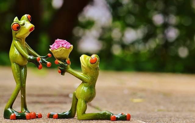 I Beg Your Pardon Marriage - Free photo on Pixabay (553791)