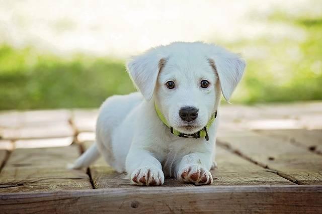Puppy Dog Pet - Free photo on Pixabay (555564)