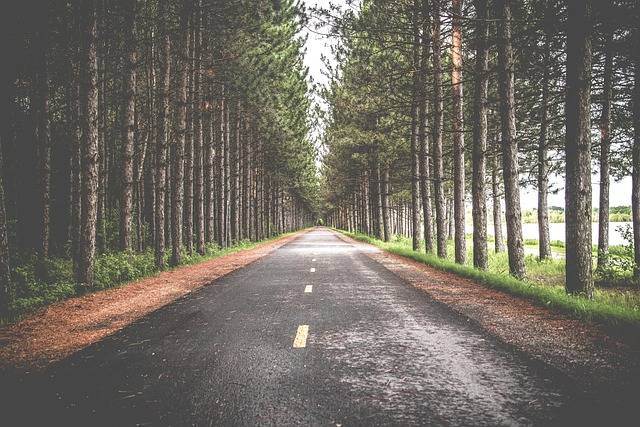 Road Trees Roadway - Free photo on Pixabay (558507)