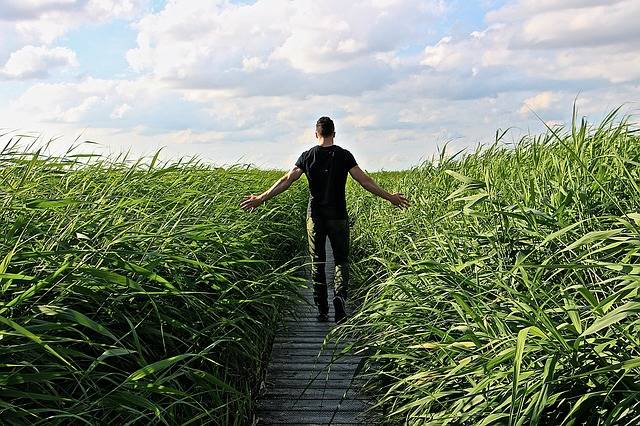 High Grass Walk Relax - Free photo on Pixabay (558510)