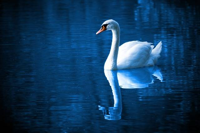 Beautiful Bird Blue - Free photo on Pixabay (559660)