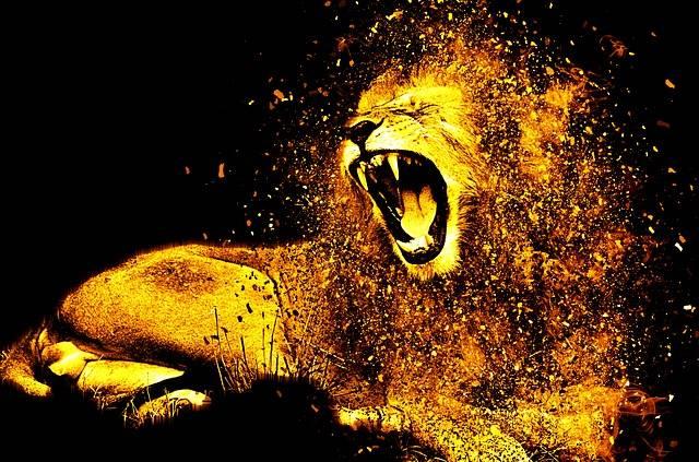 Lion Mane Hair - Free photo on Pixabay (560666)