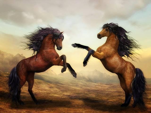 Horses Wild Animals - Free photo on Pixabay (571336)
