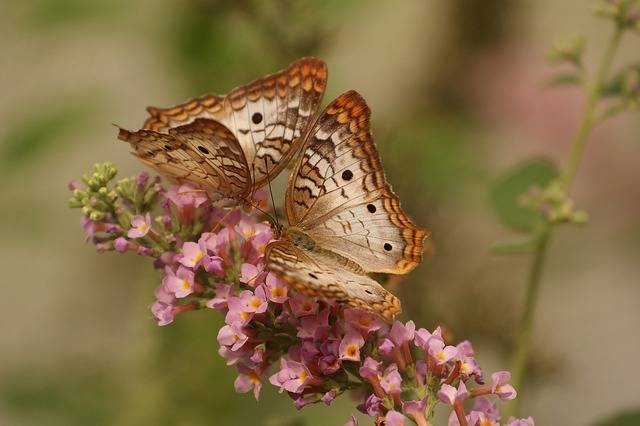 Butterfly Macro Insects - Free photo on Pixabay (571338)