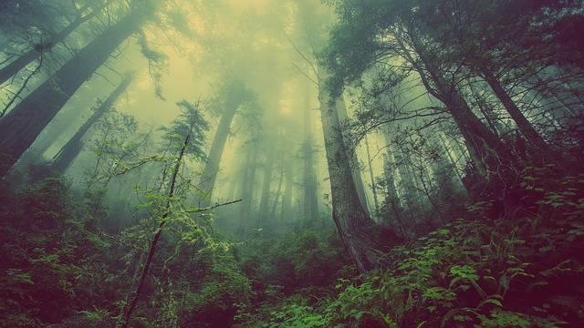 Forest Mist Nature - Free photo on Pixabay (572110)