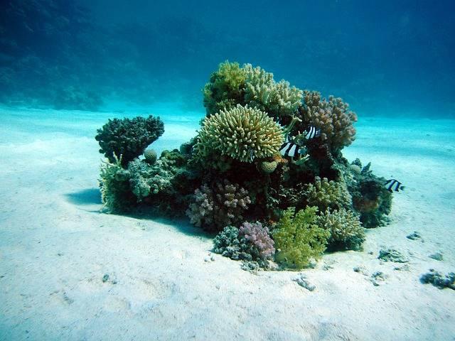 Coral Underwater Oasis Ocean Floor - Free photo on Pixabay (576543)