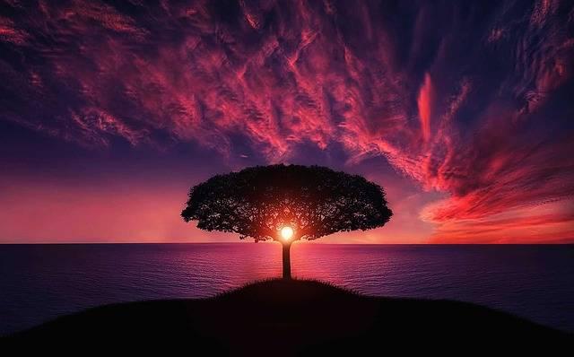 Tree Sunset Amazing - Free photo on Pixabay (576669)