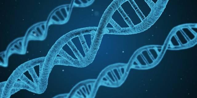 Dna String Biology - Free image on Pixabay (577941)
