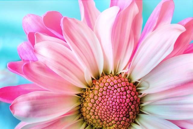 Flower Nature Flora - Free photo on Pixabay (578554)