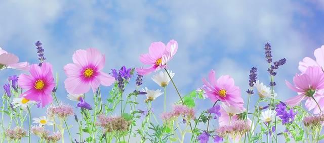 Wild Flowers Plant - Free photo on Pixabay (581289)