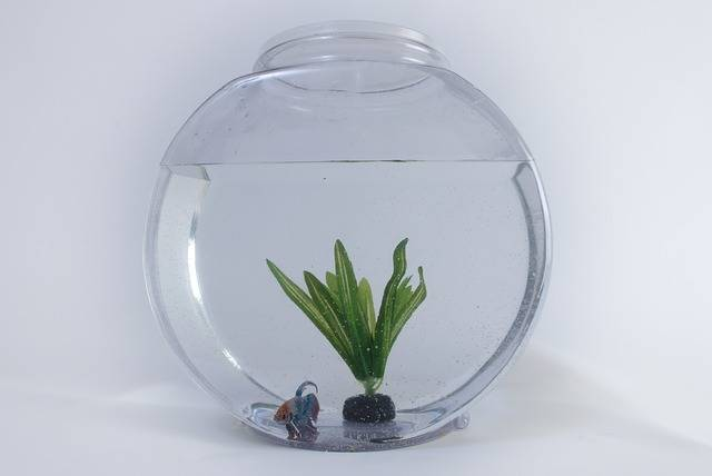 Fish Tank Aquarium - Free photo on Pixabay (582810)