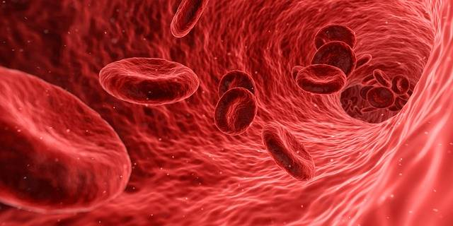 Blood Cells Red - Free image on Pixabay (586711)