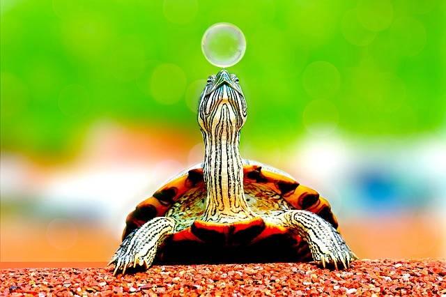 Animal Turtle Bubble - Free photo on Pixabay (589394)