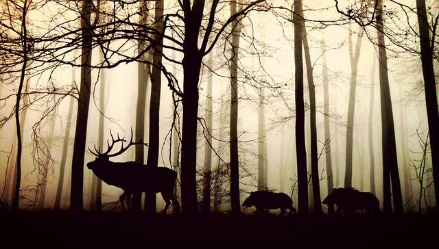 Forest Fog Hirsch Wild - Free photo on Pixabay (592559)