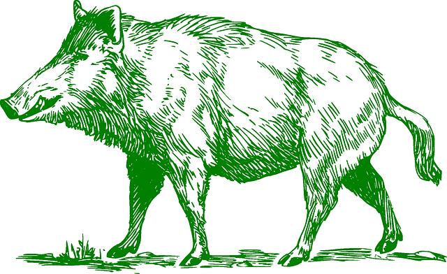 Boar Mammal Animal - Free vector graphic on Pixabay (592563)
