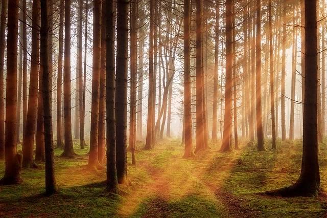 Forest Trees Sunbeam - Free photo on Pixabay (592605)