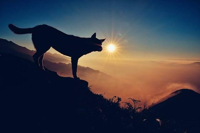 The Sun Light Fog Mountain - Free photo on Pixabay (593140)